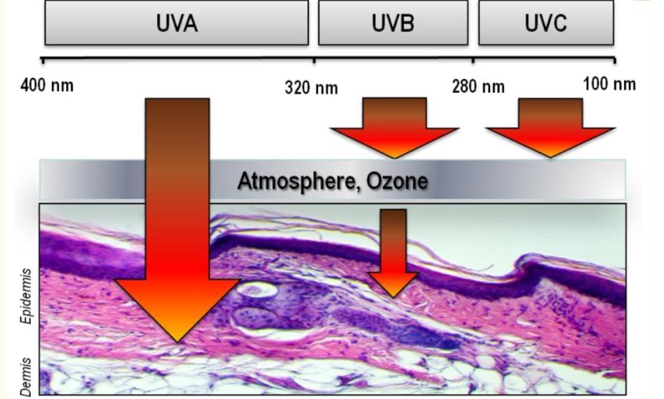 Tác động của tia UV tới da gây nên lão hoá da sớm